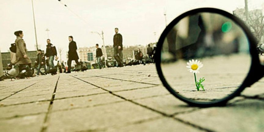 a daisy seen through a magnifying glass on a busy town street