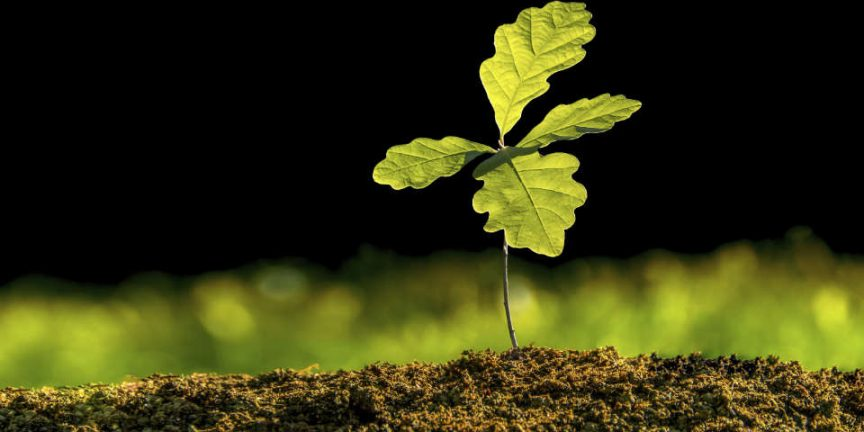 Mighty oaks from little acorns grow